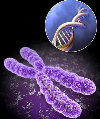 Транслокация - перенос участка одной хромосомы на другую хромосому
