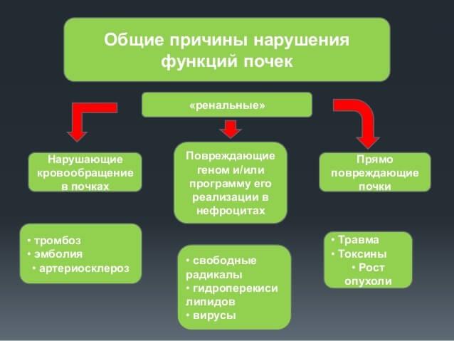 Причины нарушения функций почек