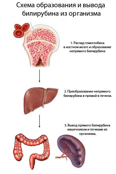 Папиллома на теле причины лечение