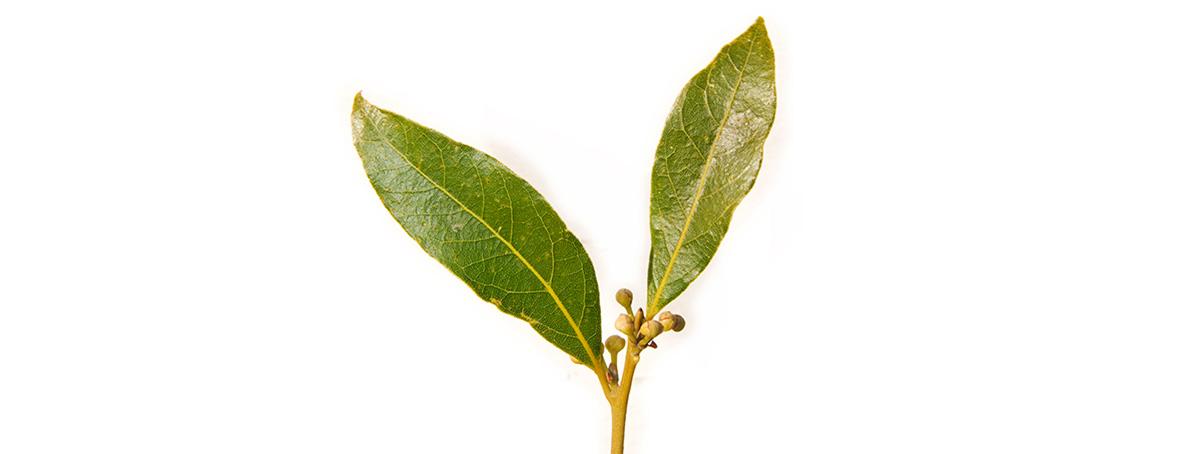 Болезни листьев флоксов