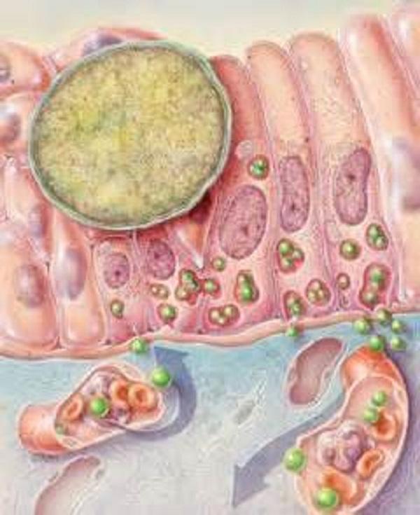 Лимфогранулема венерическая