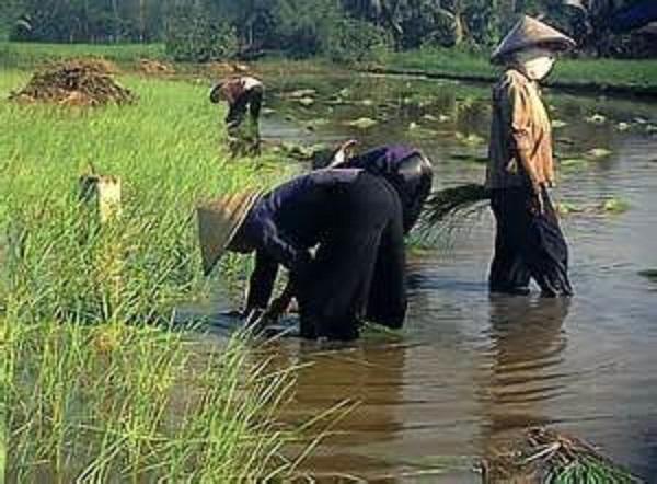 В Китае заражение происходит в связи с широким употреблением водяных орехов
