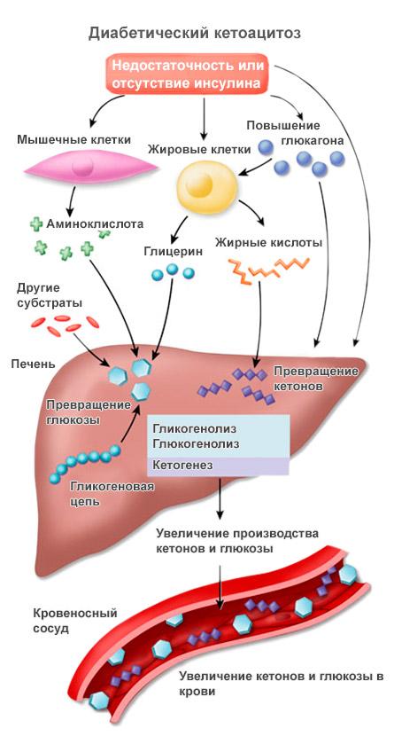 Норма сахара в крови во сне