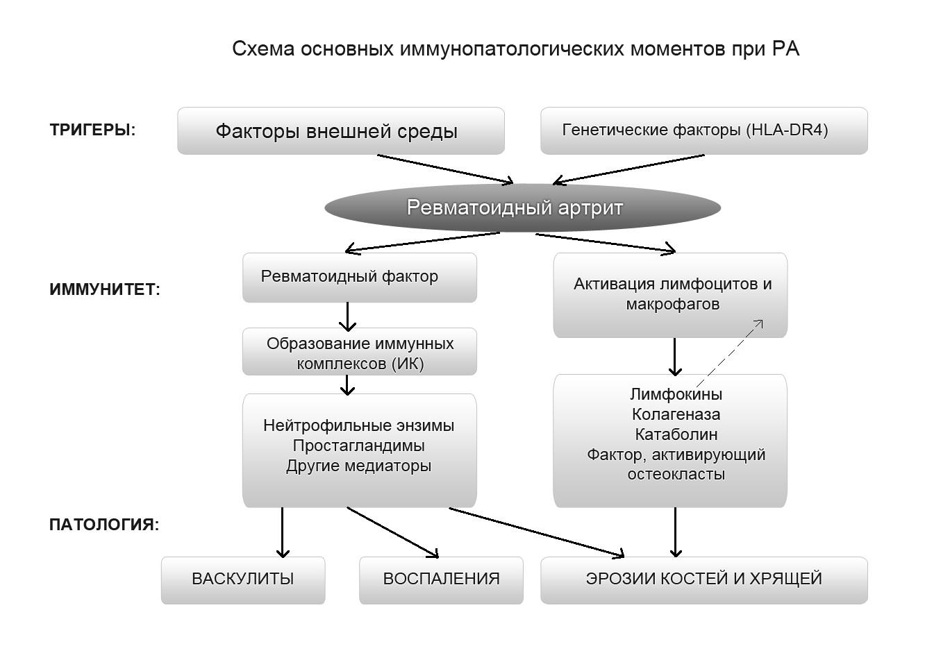 Схема иммуннопатологических моментов РА