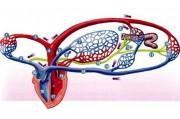 Влияние изоптина на микроциркуляцию у больных гипертонической болезнью