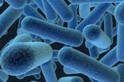 Факторы, определяющие состав микрофлоры