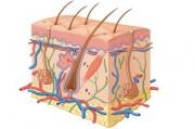 Дерматологические симптомы сирингомиелии