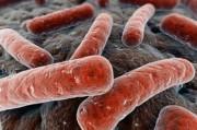 Бактериальный вагиноз: симптомы, осложнения, особенности при некоторых физиологических состояниях