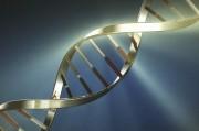 Гены предрасположенности к развитию рака