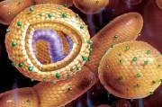 Гепатит С. Клиническая картина и естественное тече