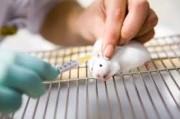 Разработка рациональных подходов к терапии тревожного и депрессивного синдромов при экспериментальном хроническом воспалении