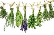 Применение пищевых и лекарственных растений в косметике