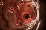 Особенности регуляции центральной гемодинамики при пограничной артериальной гипертензии
