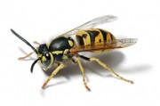 Профилактика и лечение реакции на укусы насекомых