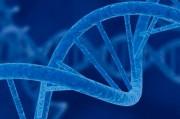 Что такое клеточная терапия и в чем её преимущества