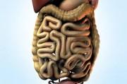 Краткий обзор анатомии и физиологии тонкой кишки