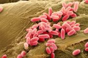 Эпидемиологические основы дезинфектологической профилактики вирусных инфекций