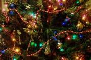 Врачи предостерегают: новогодние елки – угроза для здоровья