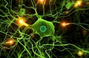 Ученые смогли преобразовать клетки кожи в клетки мозга