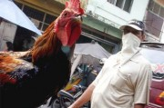 Новая пандемия гриппа – ближайшая угроза для человечества
