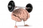 Мозг «умеет» самостоятельно восстанавливаться после травм