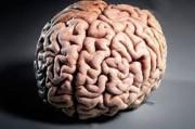 3D-распечатки головного мозга повысят навыки и умения нейрохирургов