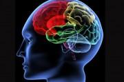 Изобретение европейских ученых поможет еще глубже проникнуть в тайны мозга.