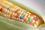 Отечественные генетики не уверены в возможности появления ГМО на рынке
