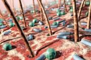 Бактерии пригодились в лечении кожных недугов