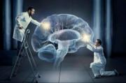 Ученые открыли «белок забвения»