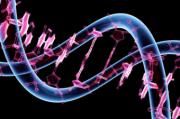 Ожирению будет противопоставлено лечение на основе генетического анализа