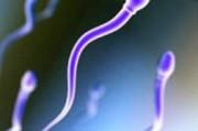 Лекарство от мужского бесплодия найдено.