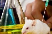 Животные больше не будут первопроходцами в тестировании косметики.
