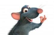 Крыса стала обладательницей искусственно выращенной почки