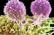 Генетикам стал известен механизм развития редчайших форм рака.