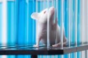 Иммунитет предотвращает рецидивные злокачественные опухоли
