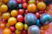 Фиолетовые томаты претендуют на звание отличного защитника от хронических заболеваний