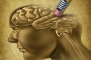 Найден ген, способный стирать воспоминания