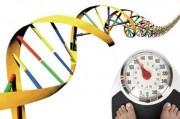 Генетики вникли в природу полноты
