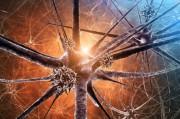 Связь вируса герпеса с маркерами долголетия