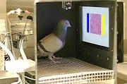 В диагностике опухолей помогут голуби