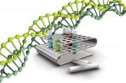 Особая хромосомная аномалия - новая диковинка из Китая
