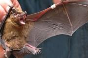 Яд летучих мышей превратился в надежду современной кардиологии