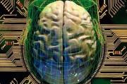 Благодаря использованию клеточных технологий выращен искусственный мозг