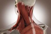 Ученые похвастались прорывом в создании мышечных тканей