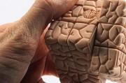 Мозг предпочитает картинки