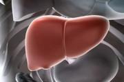 Клеточная терапия призвана избавить от пересадки печени