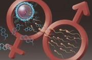 Презервативы от гомеопатов решили основные проблемы контрацепции