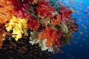 Кораллы станут основой солнцезащитных средств нового поколения
