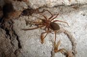 Лекарство от редких заболеваний крови против одного из самых страшных паучьих ядов